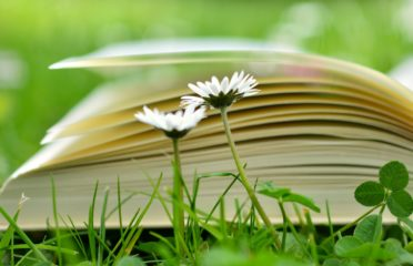 Book on grass with daisies